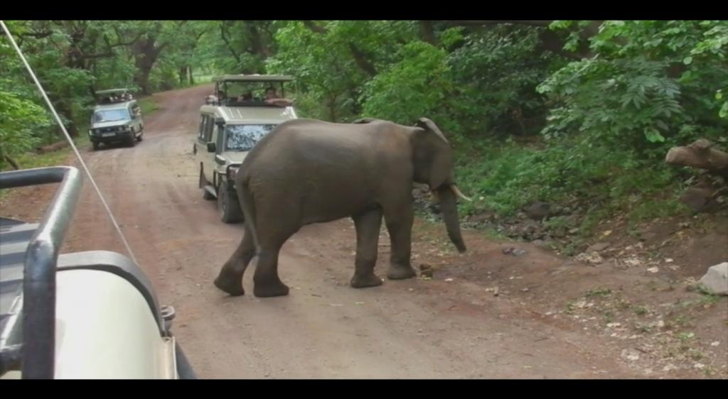 Safari video family adventure